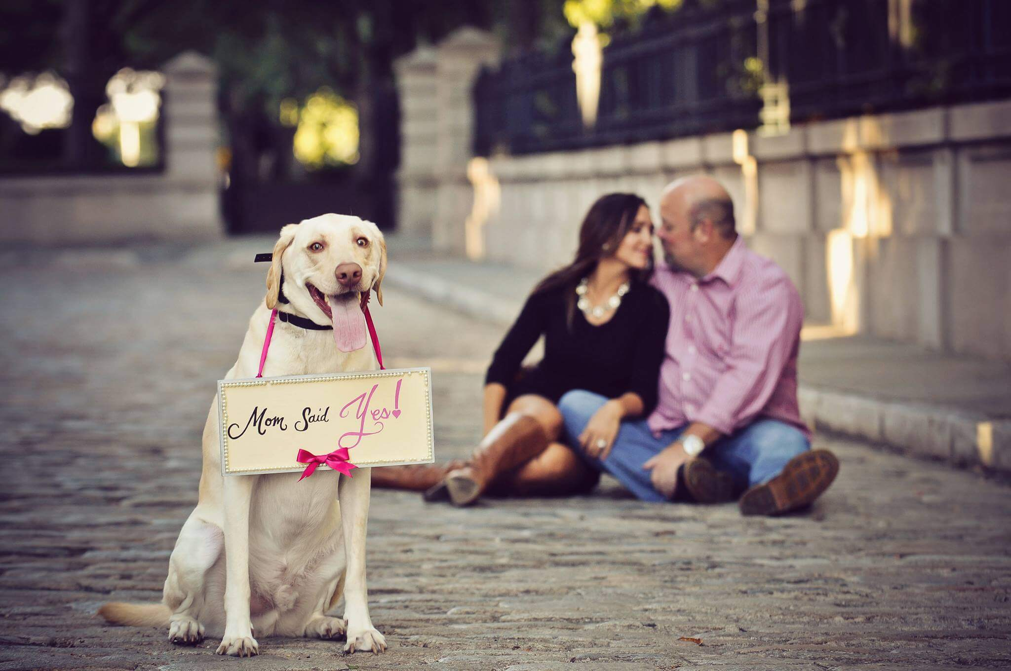 how to include your dog into the marriage proposal proposal ideas